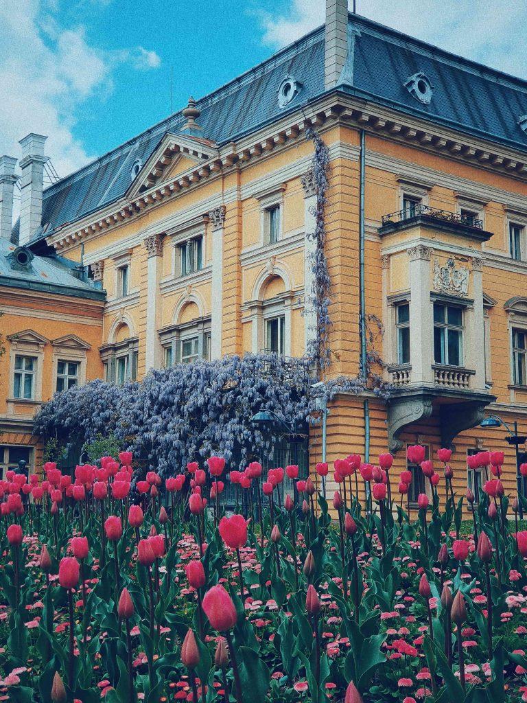 нацъфтели лалета на фона на царския дворец в центъра на София