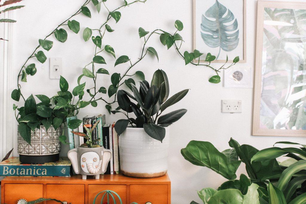 много различни растения в саксии вурху дървен шкаф