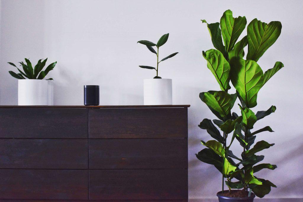 зелени растения върху дървен шкаф
