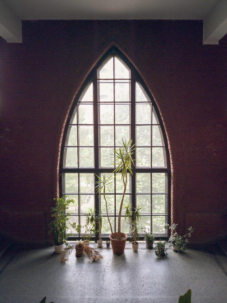 Сводести прозорци в Биологическия факултет